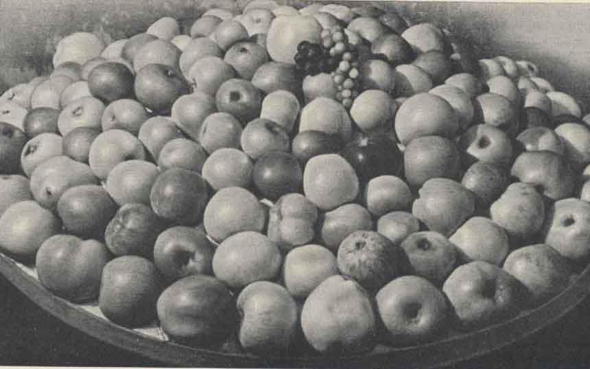 ДИЕТА.ру, Книга о вкусной и здоровой пище, рис. стр. 332