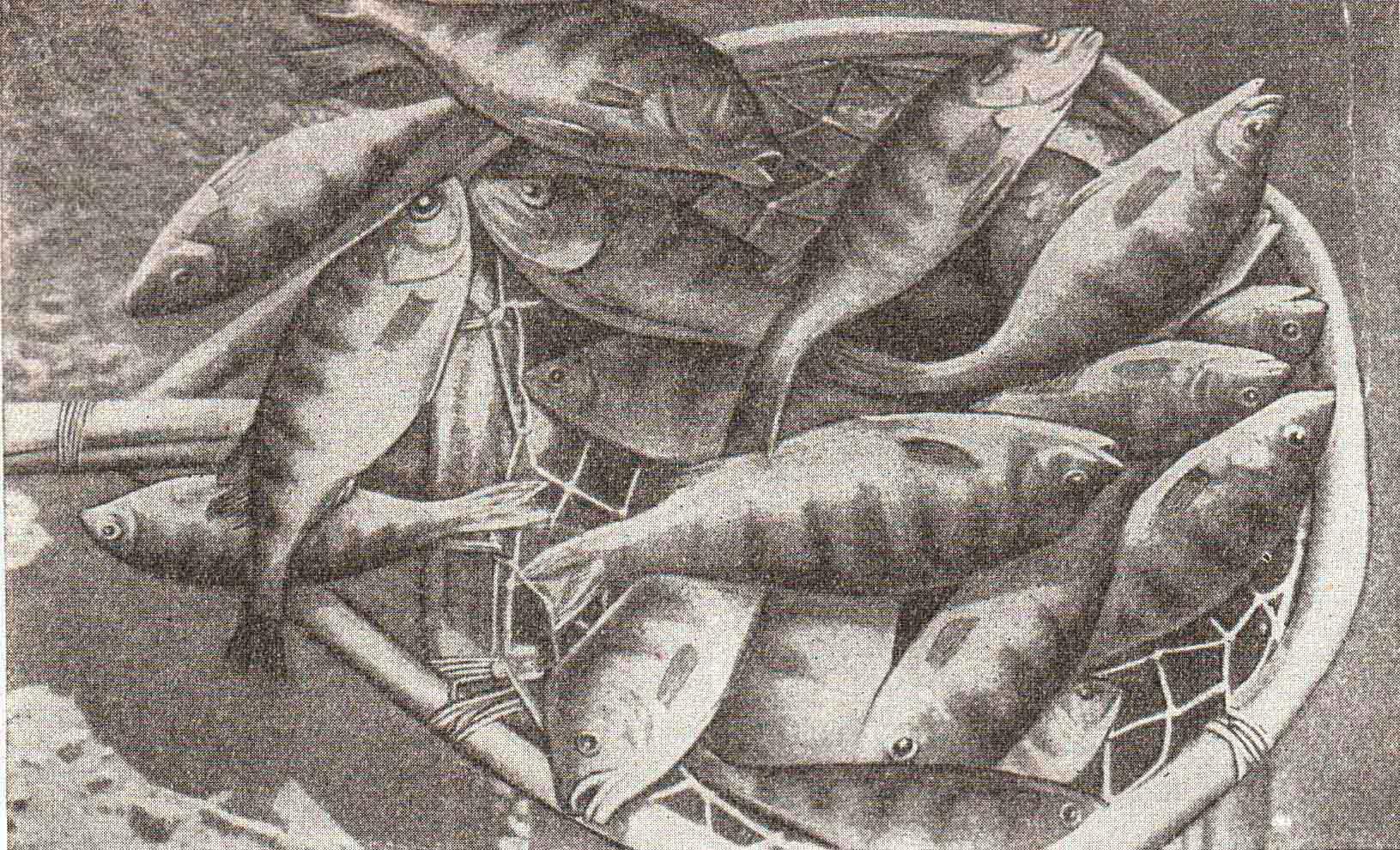ДИЕТА.ру, Книга о вкусной и здоровой пище, рис. стр. 146